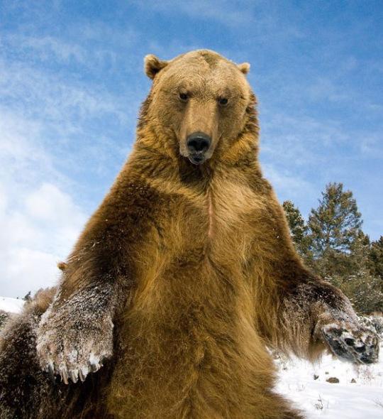 北极熊一.jpg