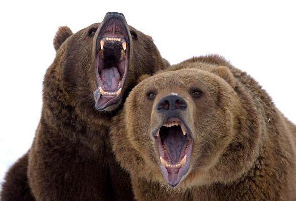 北极熊二.jpg