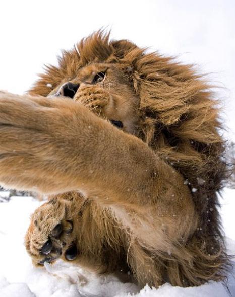 狮子三.jpg