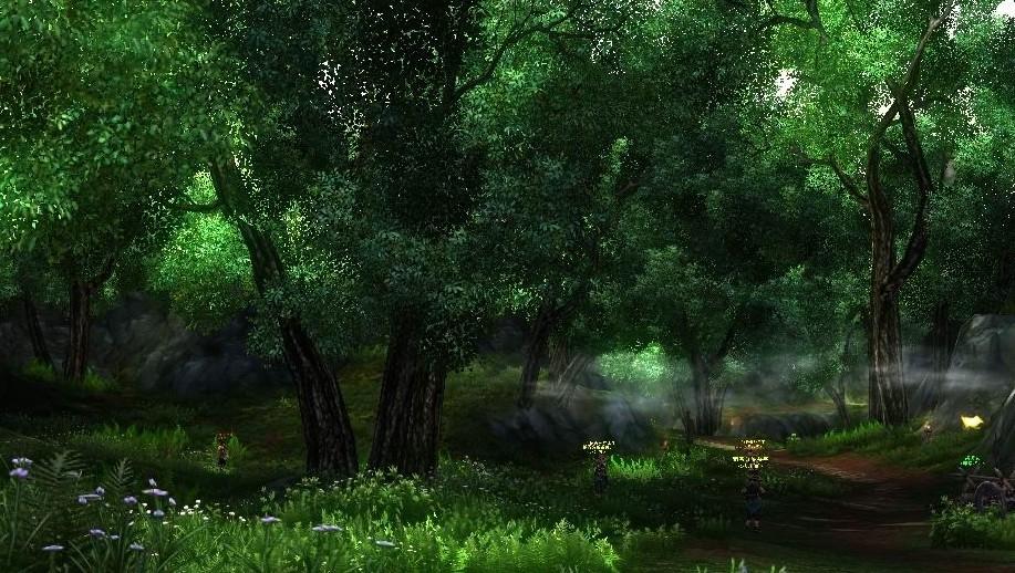 壁纸 风景 森林 桌面 917