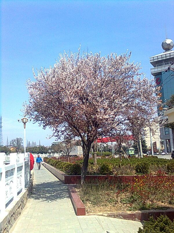 花树风景手机壁纸