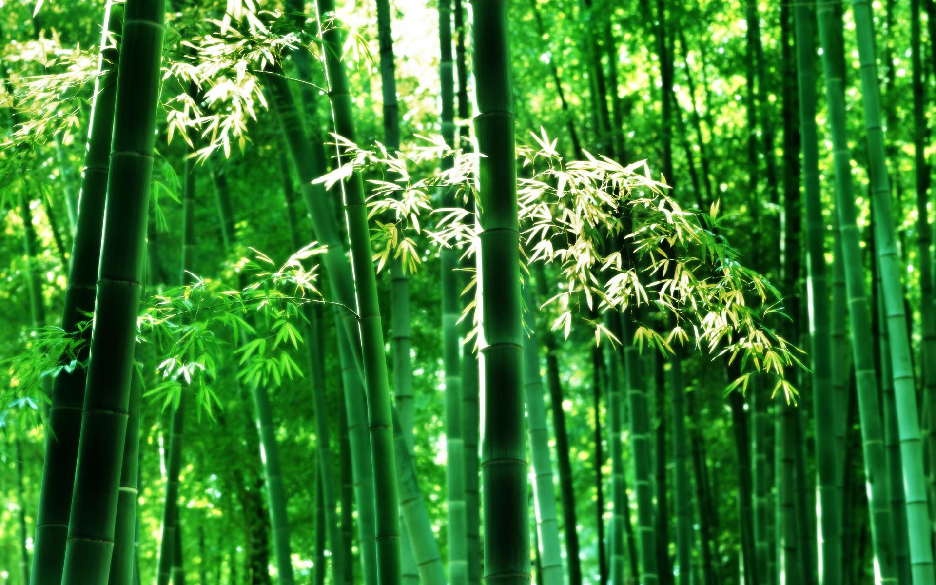 壁纸 风景 森林 植物 桌面 1920_1200
