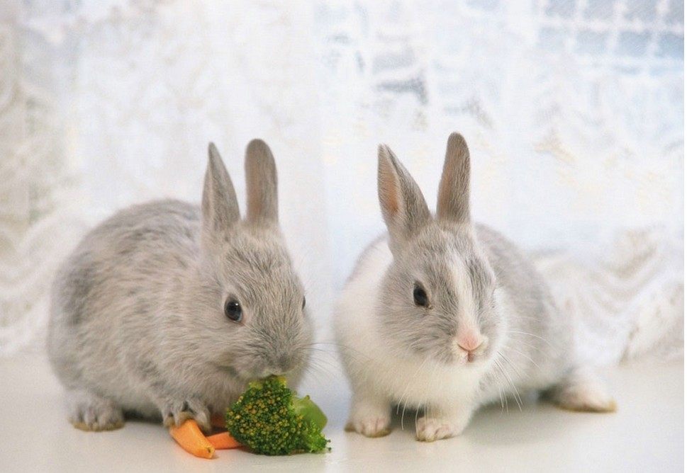 白兔兔图片大全可爱