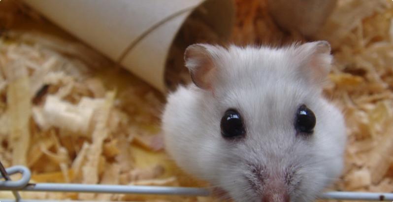 超萌鼠类动物图片
