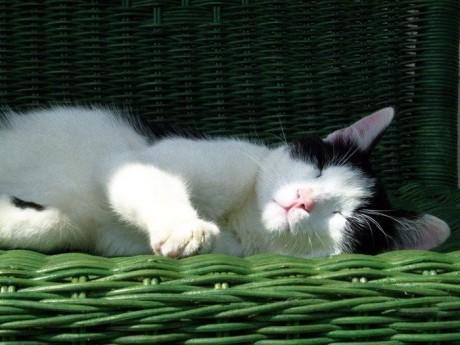 猫咪在午睡.jpg