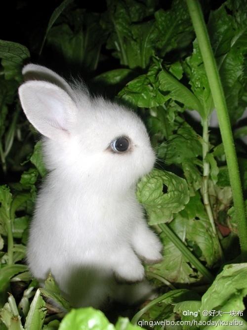 壁纸 动物 兔子 500_667 竖版 竖屏 手机