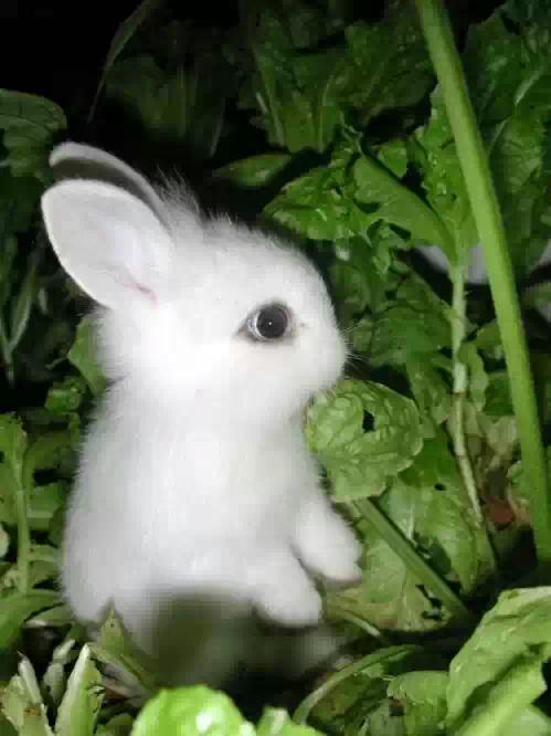 可爱兔子萌图gif