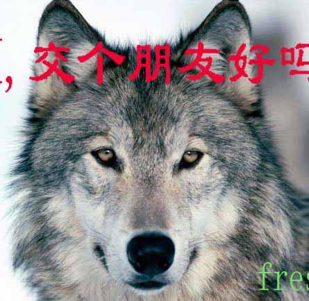 12 个狼群的成员牺牲了自己用自己的身体打破了海蓝的防火墙(海蓝没