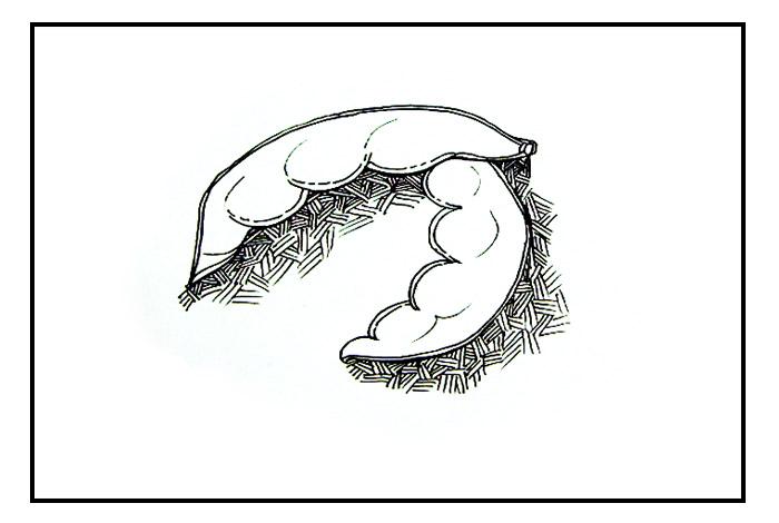 卡通故事简笔画 - 卡通画画简笔画美少女