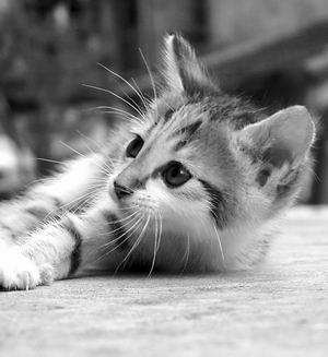 本区各位有爱人士的可爱动物头像!~~持续编辑中