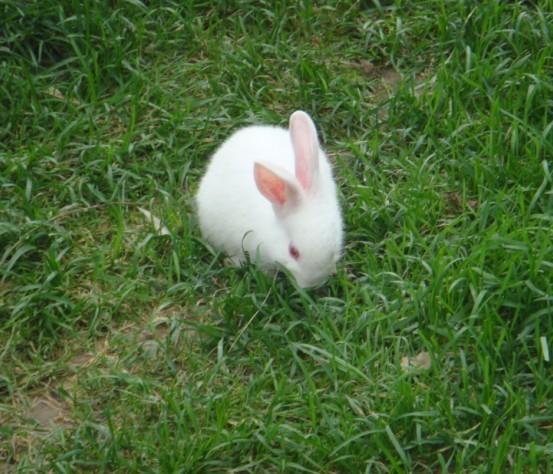 淡月凝装     时间: 2009-8-26 16:43   嘎嘎 好可爱滴兔宝宝啊