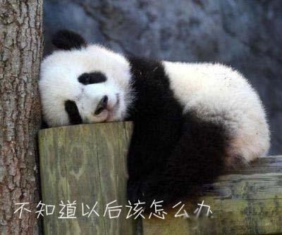 愁的可爱动物图片