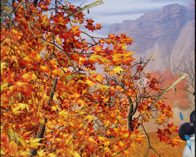 风华谷的枫树是不是都有点不对