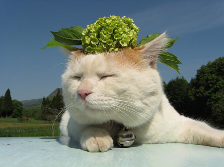 可爱的猫咪可爱小猫咪; 超级可爱的大头猫咪超强写真集;; 猫叔的特长