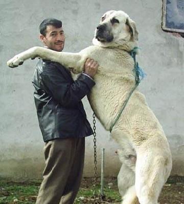 名狗大全_名狗名称及图片大全_世界名狗图片大全